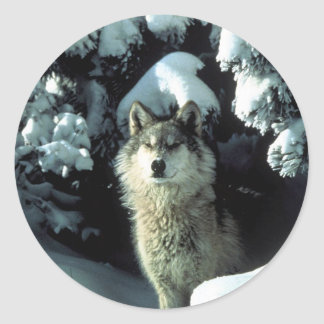 North American Timber Wolf in Snow Classic Round Sticker