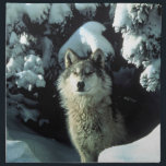 """North American Timber Wolf in Snow Cloth Napkin<br><div class=""""desc"""">Image of wolves. North American Timber Wolf in Snow. Images with the &quot;By Remi&quot; insignia. More images at http://frontiernowimages.com NOTE: The picture or text image can be moved,  resized,  or deleted.  You can add your own text.</div>"""