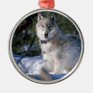 North American Timber Wolf in Snow Metal Ornament