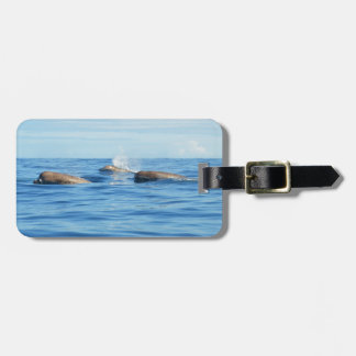 North Atlantic Bottlenose Whales Tag For Luggage
