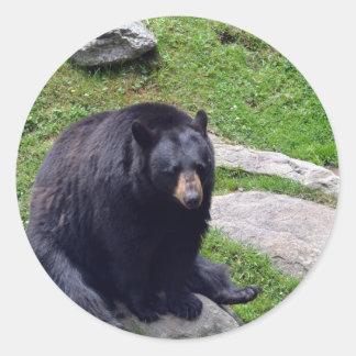 North Carolina Bears Classic Round Sticker