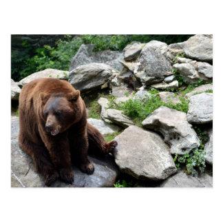 North Carolina Bears Postcard