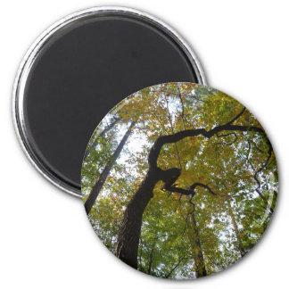 North Carolina Forests Magnet