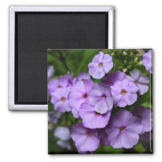 North Carolina Phlox Flowers 2 Inch Square Magnet