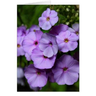 North Carolina Phlox Flowers Greeting Card