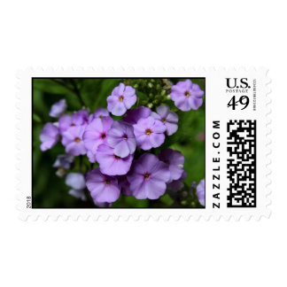 North Carolina Phlox Flowers Postage