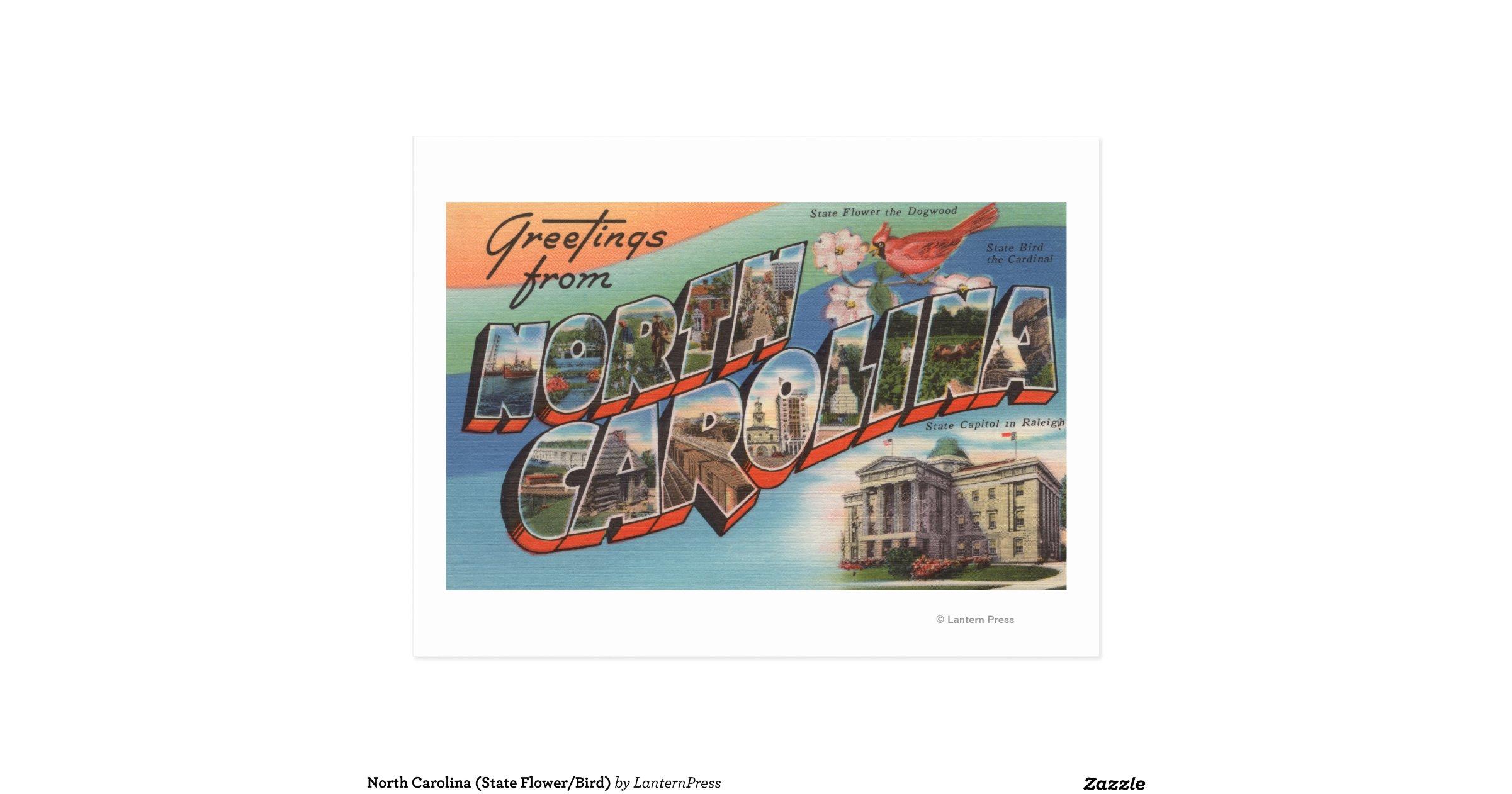 north carolina state flower bird postcard r864e2bb baa8cddcbf1a3b4a4eb v