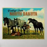 North Dakota Nokota Horses Posters