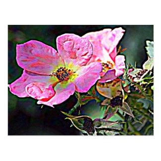 North Dakota Wild Rose Postcard