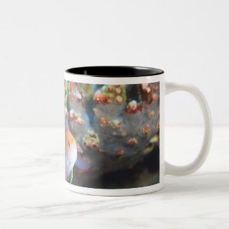 North Huvadhoo Atoll, Southern Maldives, 3 Two-Tone Coffee Mug
