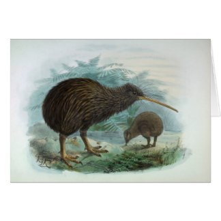 North Island Brown Kiwi Vintage Bird Illustration Card