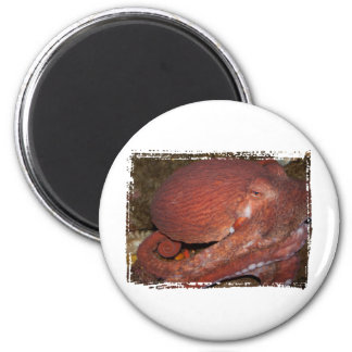 North Pacific Giant Octopus 2 Inch Round Magnet