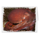 North Pacific Giant Octopus Cards
