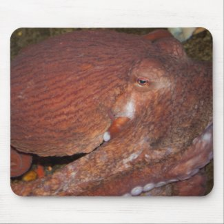 North Pacific Giant Octopus mousepad