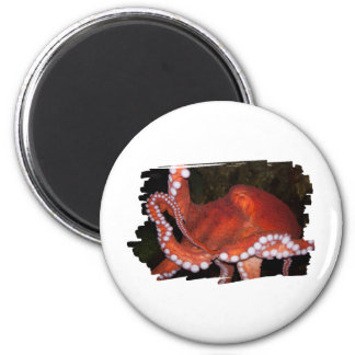 North Pacific Octopus 2 Inch Round Magnet