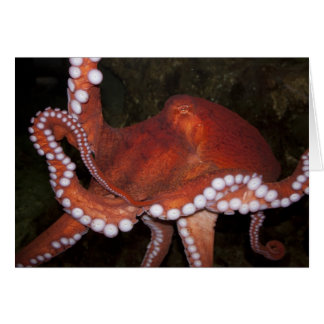 North Pacific Octopus Card