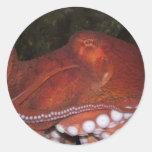 North Pacific Octopus Classic Round Sticker