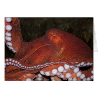 North Pacific Octopus Greeting Card