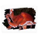 North Pacific Octopus Postcard