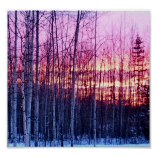 North Pole Trees Paper Matte Poster