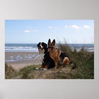 North Sea beach Poster