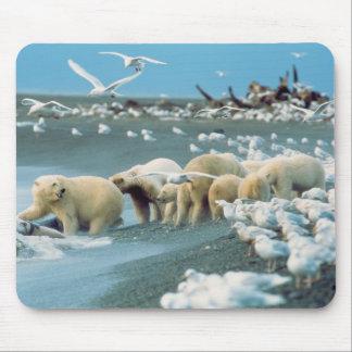 North Slope, Alaska. Polar Bears Ursus Mouse Pad
