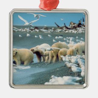 North Slope, Alaska. Polar Bears Ursus Christmas Tree Ornament