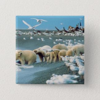 North Slope, Alaska. Polar Bears Ursus Pinback Button