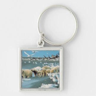 North Slope, Alaska. Polar Bears Ursus Silver-Colored Square Keychain