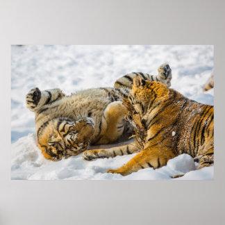 Northeast Tiger Poster