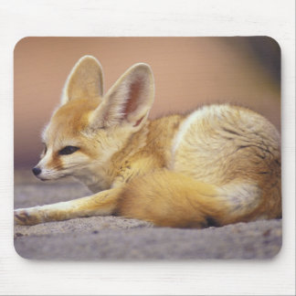 Northern Africa. Fennec Fennecus zerda) Mouse Pad