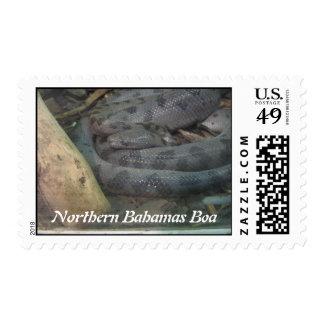 Northern Bahamas Boa Postage Stamp