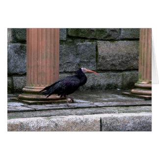 Northern Bald Ibis Card