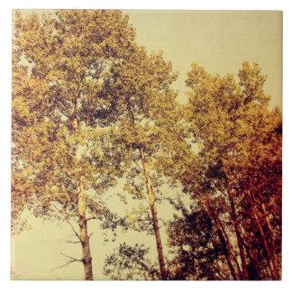 Northern Birch Trees Art Ceramic Tile