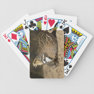 Northern Bobwhite quail babies at pond for drink Bicycle Playing Cards