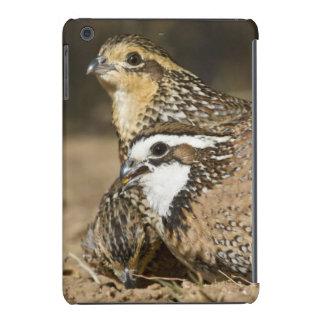 Northern Bobwhite quail babies at pond for drink iPad Mini Retina Covers