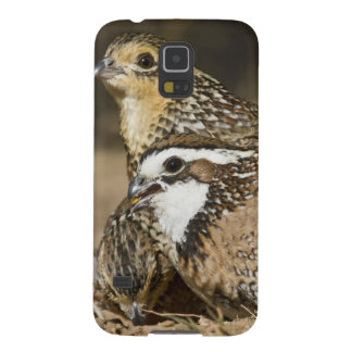 Northern Bobwhite quail babies at pond for drink Galaxy S5 Cover