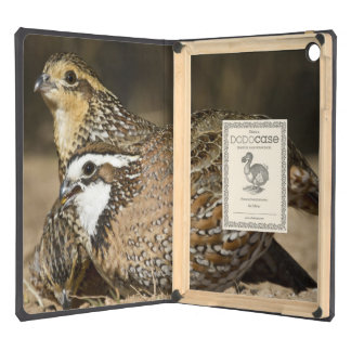 Northern Bobwhite quail babies at pond for drink iPad Air Case