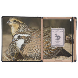 Northern Bobwhite quail babies at pond for drink iPad Covers