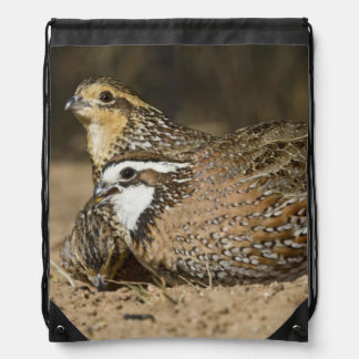 Northern Bobwhite quail babies at pond for drink Drawstring Backpack
