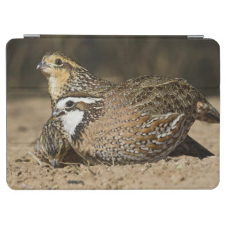 Northern Bobwhite quail babies at pond for drink iPad Air Cover