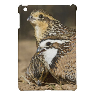 Northern Bobwhite quail babies at pond for drink iPad Mini Case