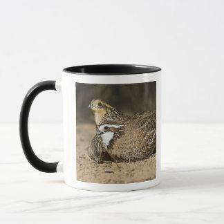 Northern Bobwhite quail babies at pond for drink Mug
