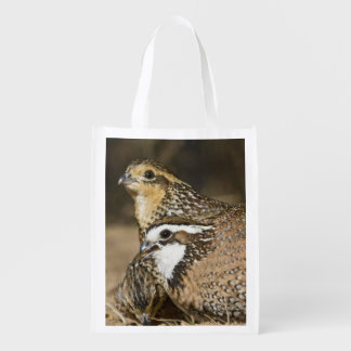Northern Bobwhite quail babies at pond for drink Reusable Grocery Bag