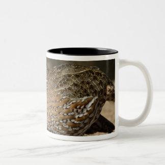 Northern Bobwhite quail babies at pond for drink Two-Tone Coffee Mug