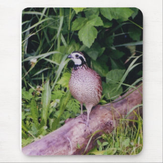 Northern Bobwhite Quail Mouse Pad