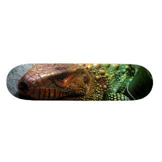 Northern Caiman Lizard Dracaena Guianensis Skateboard Deck