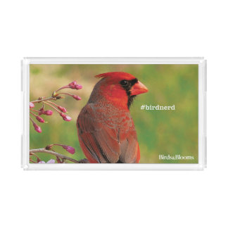 Northern Cardinal 2 Acrylic Tray