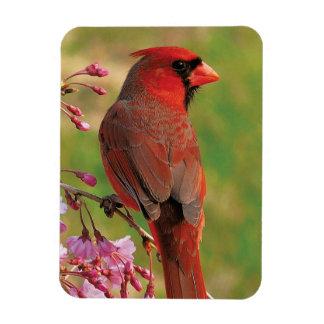 Northern Cardinal 2 Magnet