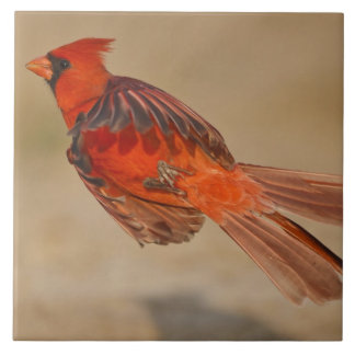 Northern Cardinal adult male in flight Ceramic Tile